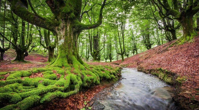 Le Foreste aumentano ma respirano di meno