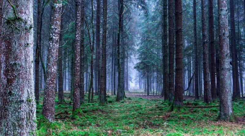 piano di riforestazione