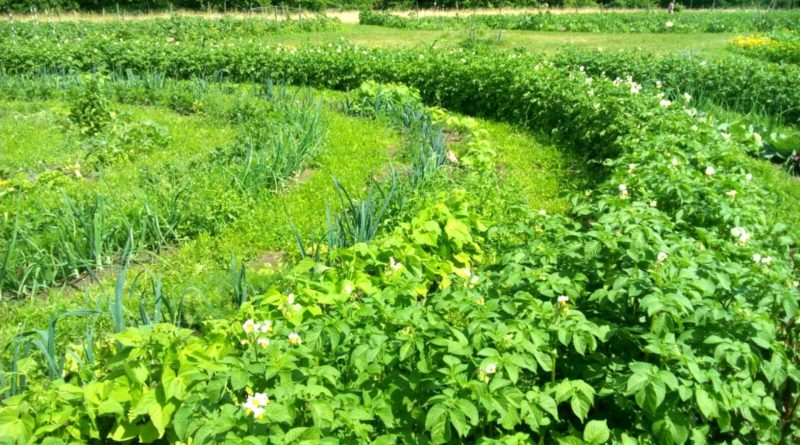 Agricoltura sinergica