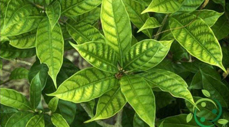Ruolo del manganese nelle piante