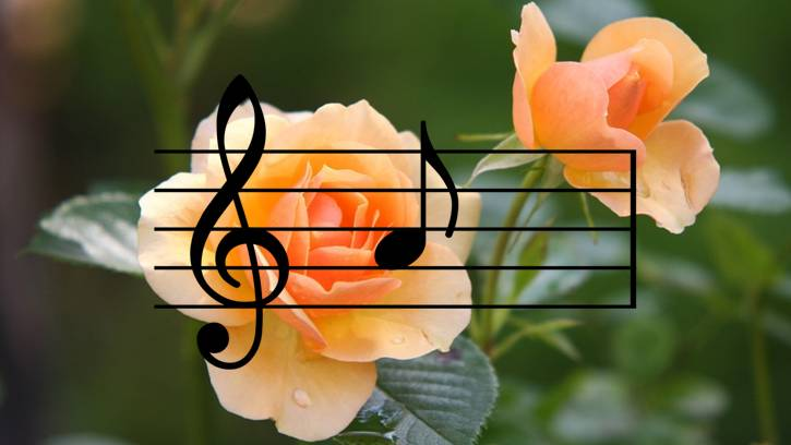 musica preferita dalle piante