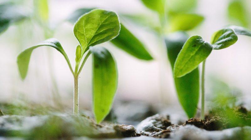 Pesticidi e degenerazione microbiologica dei suoli