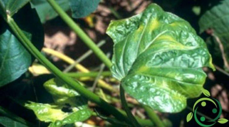 Ruolo del Rame nelle piante