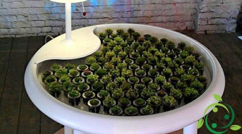 Energia elettrica dalle piante