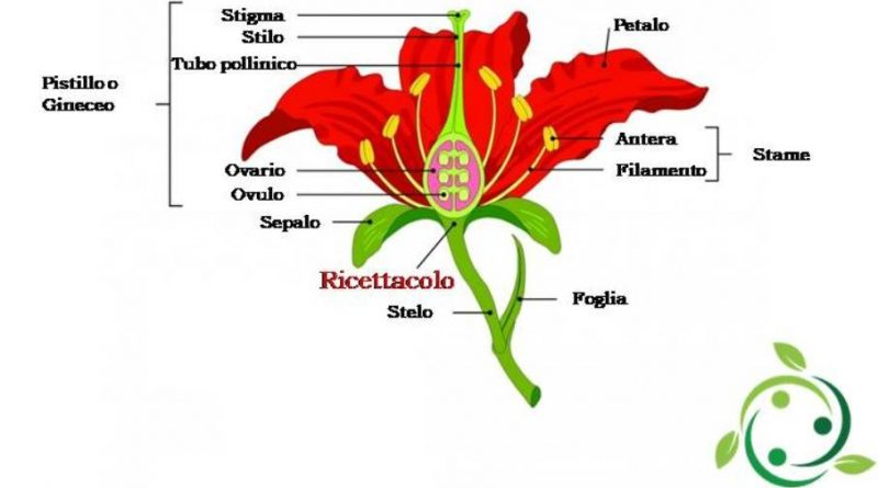 Ricettacolo
