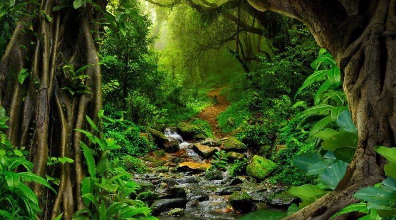 Risultati immagini per foresta tropicale