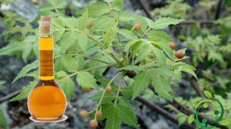 Olio essenziale di linaloe