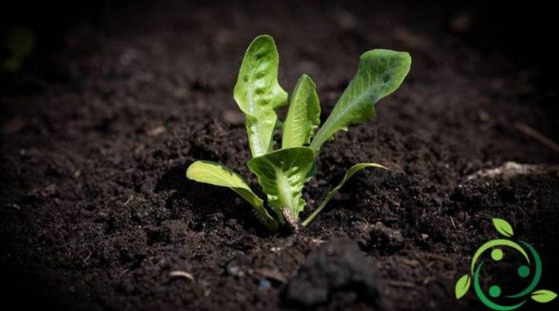 Ruolo del sodio nelle piante
