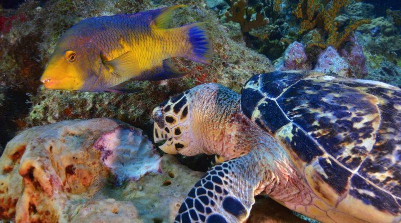 Rifiuti di plastica ed Ambiente marino