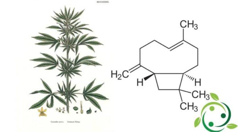 β-cariofillene