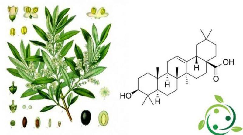 Acido oleanolico