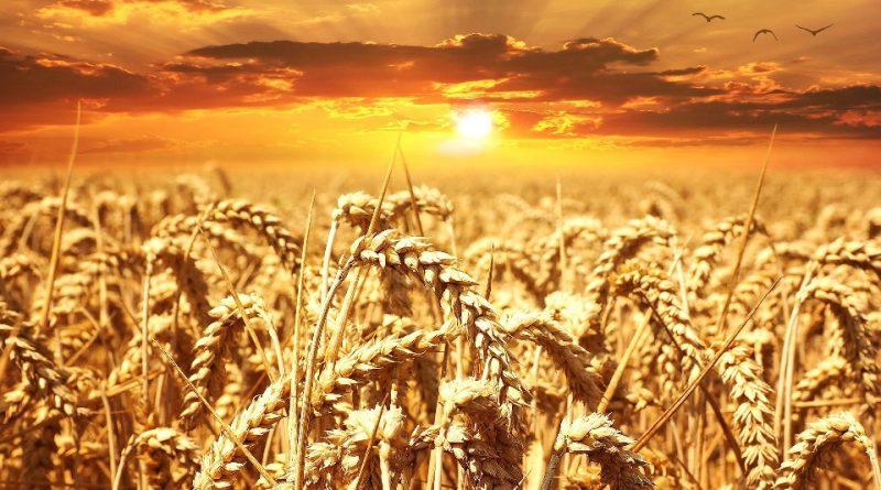 Agroecologia e sistema agroalimentare
