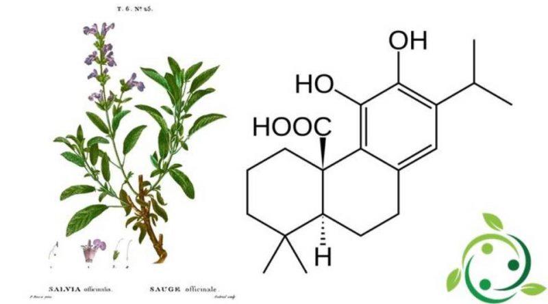 Acido carnosico