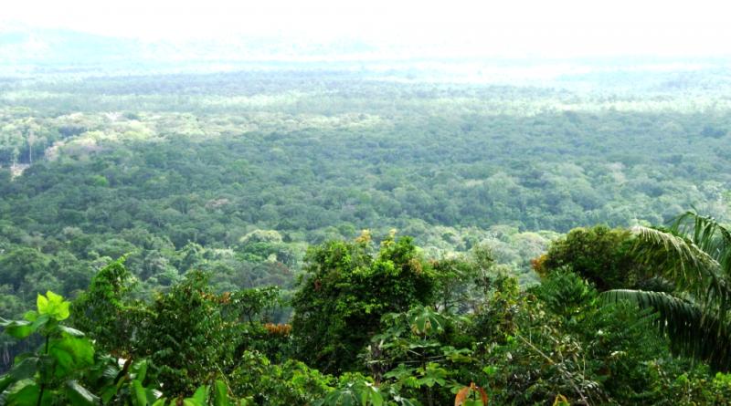 Parco amazzonico della Guyana francese