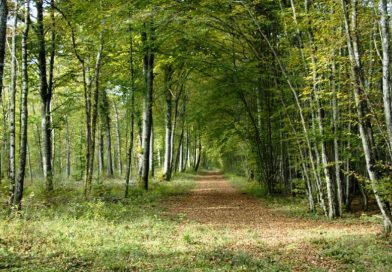 Forêts national park