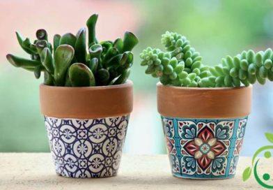 Come coltivare le piante grasse in casa