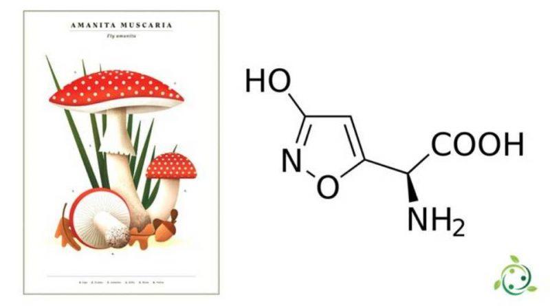 Acido ibotenico