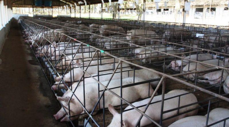 Basta animali in gabbia