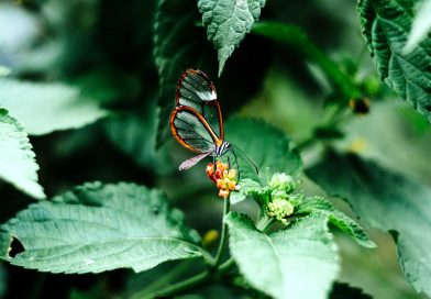 Autorizzazioni per l'uso dei pesticidi scientificamente insufficienti
